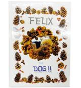 FELIX THE DOG!!表紙